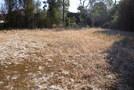 長生村一松 206坪 緑豊かな静かな環境  値下げ!の画像4