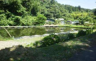 千葉県長生郡睦沢町大上 釣り堀(ヘラブナ)売ります!営業中。