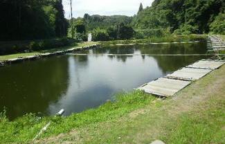 睦沢町大上 営業中の釣り堀売ります!