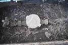 茂原市東部台3-11-2 東南角地 日当たり良好 更地渡しの画像